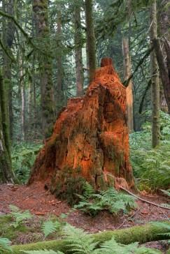 Angeleuchteter Baumstumpf