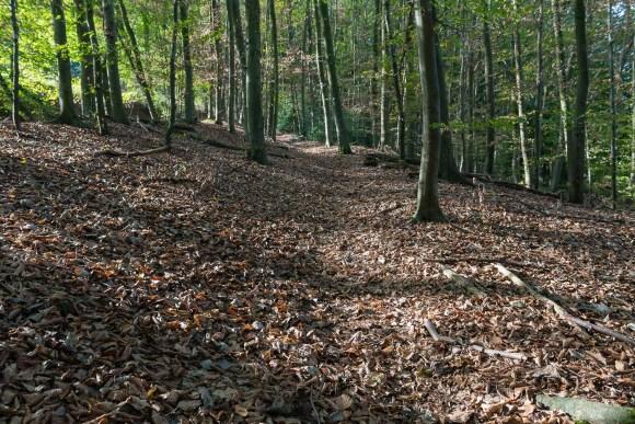 Im Wald leicht bergauf