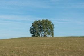 Nach Odinghausen im Feld