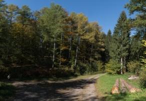 Waldweg entlang des Stausees