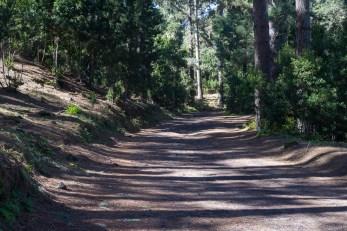 Fahrweg durch den Kiefernwald