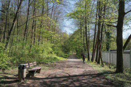 Waldweg hinter dem Schwimmbad Wiembachtal
