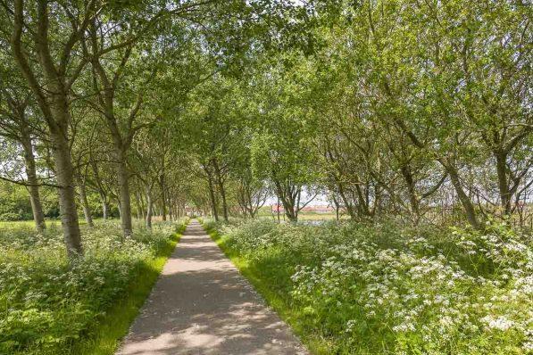 Frühlingshafte Allee auf dem Weg nach De Corksdorp