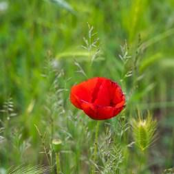 Nur selten hielten die Blumen still, es war zu windig