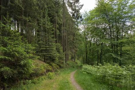 Naturbelassener Waldweg