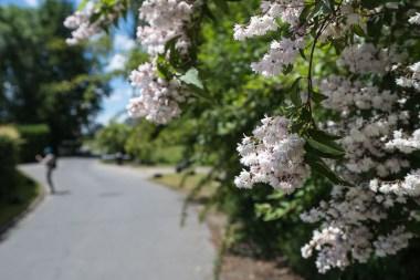 Blüten unterwegs nach Dattenfeld