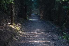 Rein in den dunklen Wald