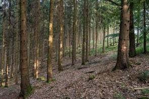 Durch den Wald nach Schückhausen