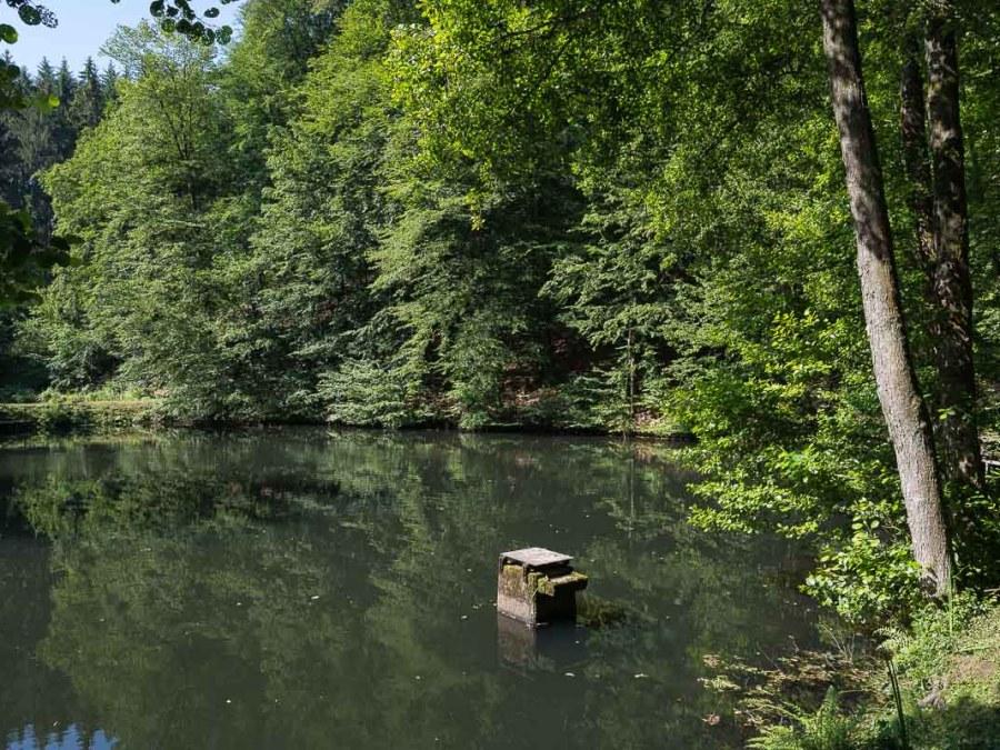 Teich kurz vor Unterquerung der A4