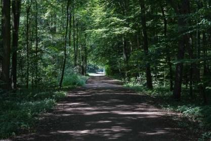 Im Wald auf dem Rückweg