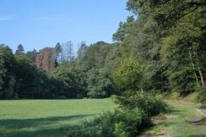 Baumsterben im Hintergrund