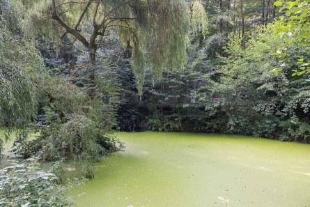 Teich in der Klosteranlage