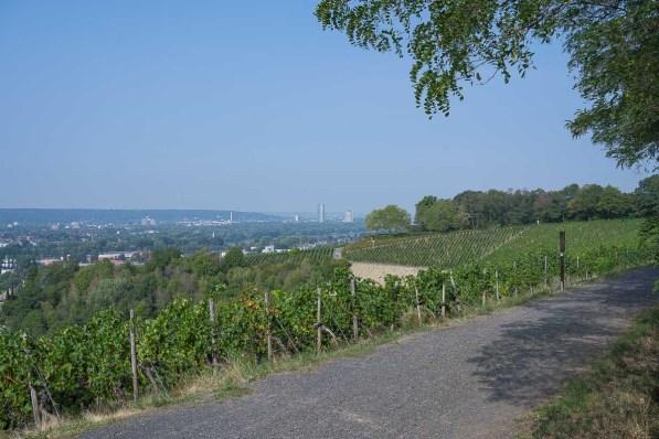 Blick über die Weinberge nach Bonn