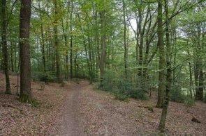 Waldweg hinter Ommerborn