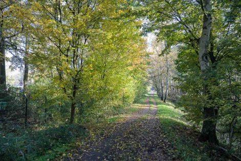 Wanderweg parallel zur Niers