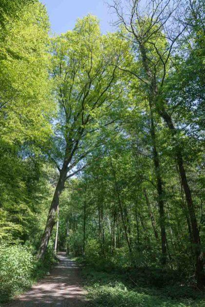 Bäume in beeindruckender Grösse