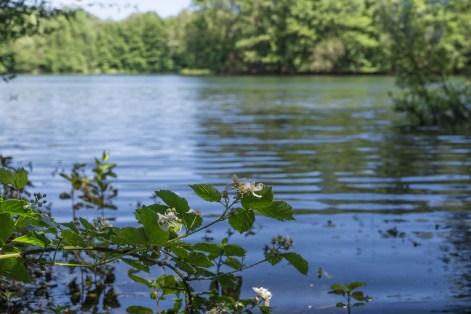 Heidesee mit Brombeerblüten