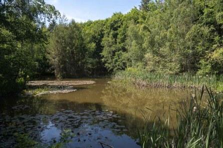 See im Wald oberhalb des Ortes