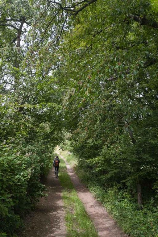 Kirschbäume säumten unseren Weg