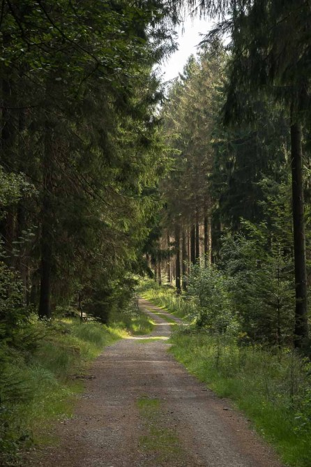 Langezogener Waldweg