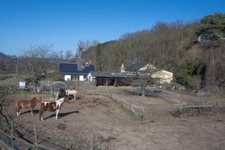 Pferdehof bei Burg Vilzeit