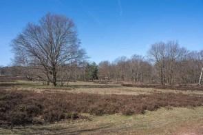 Typische Heidelandschaft mit Heidekraut