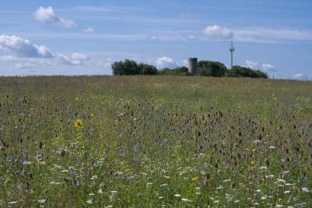Im Hintergrund der Turm der Schlegelwarte