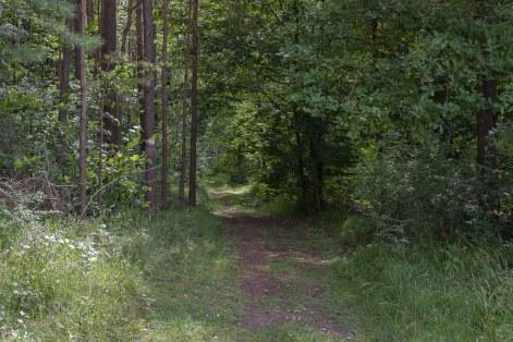 Typischer Waldweg auf dieser Runde