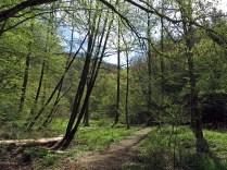 Im Tal der Kleinen Kyll