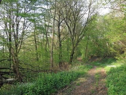 Der Zuweg nach Scheuerfeld