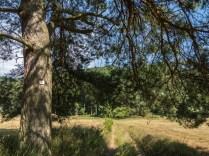 Ein herrlicher Abschnitt durch das Schlangenbachtal