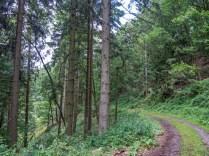 Waldabschnitt kurz vor Welschenbach