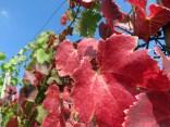 Die ersten Blätter verfärben sich bereits