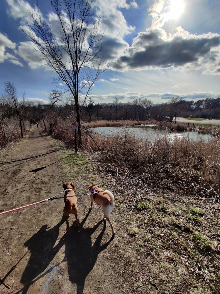 top hiking trails in minneapolis, theodore wirth park