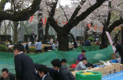 Japanese Spring Means Hanami and Picnics