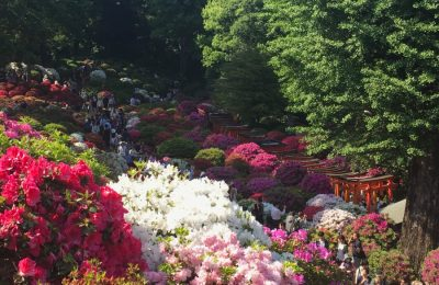 Azalea Festival at Nezu Shrine