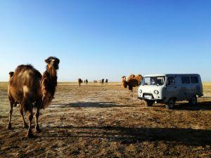 How to travel in Kazakhstan