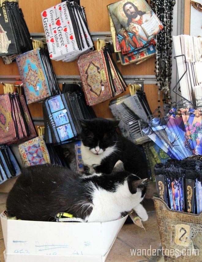 Plaka Cat 12 Wandertoes