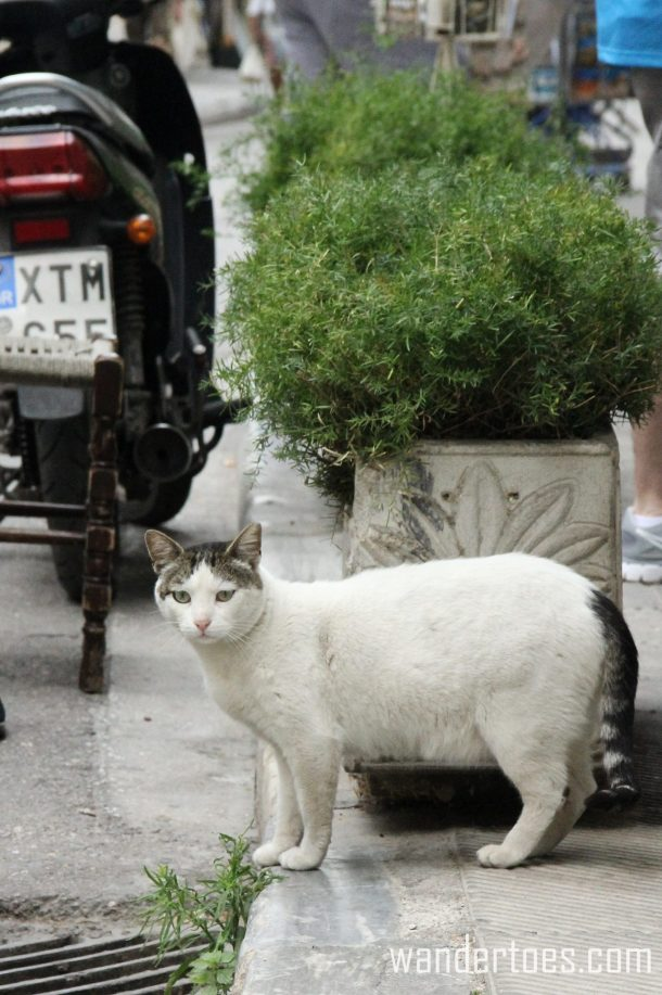 Plaka Cat 9 Wandertoes