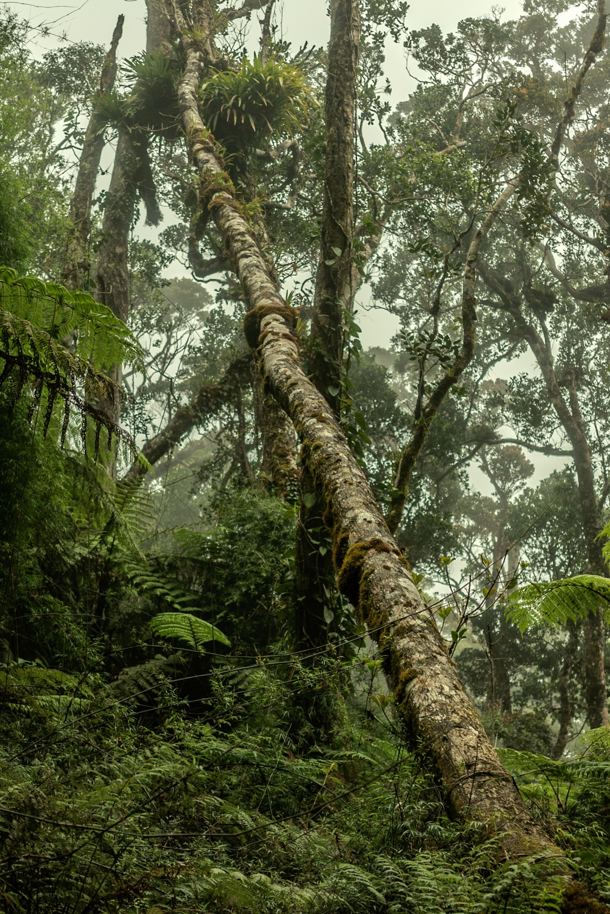 Photo Of Rainforest In Mount Kinabalu Malaysian Borneo Sabah Photo Is Free To Use