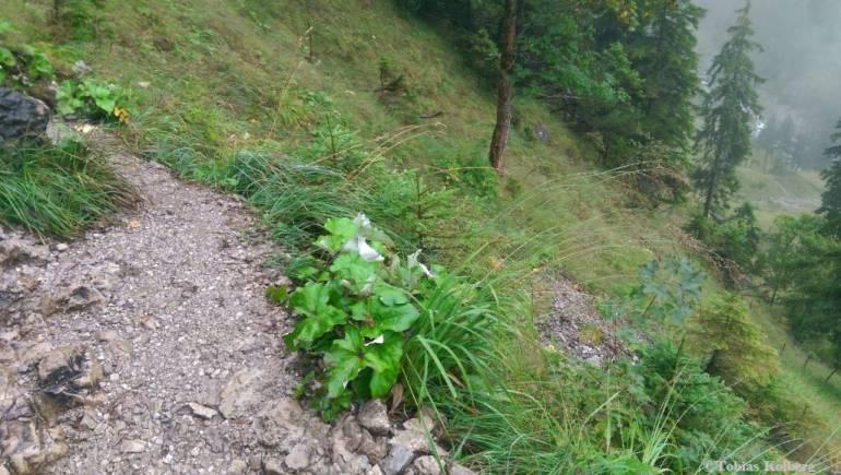 Wandern_PwC_Gipfelstuermer_2014_Tag2_Tobias_044