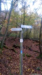 Wandern_20141103_Baumgeistertour_Rundweg_Tobias_024