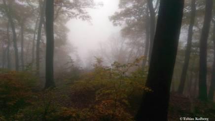 Wandern_20141103_Baumgeistertour_Rundweg_Tobias_031