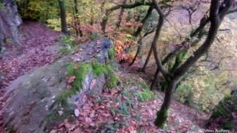 Wandern_20141103_Baumgeistertour_Rundweg_Tobias_076