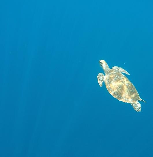 Gili Air turtle