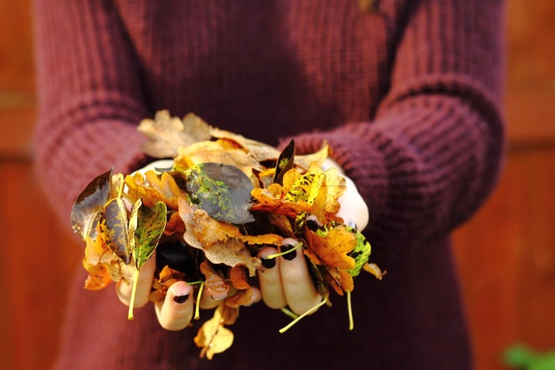 holding autumn leaves