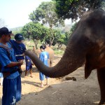 Pablo & Sol meeting an elephant