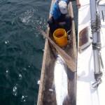 Handfishing in Bocas del Toro