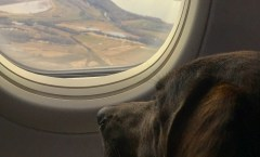 Lucy on a plane - wander with melissa
