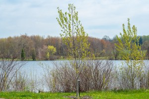 Mark Braun's tree - wander with melissa